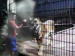 menino e tigre